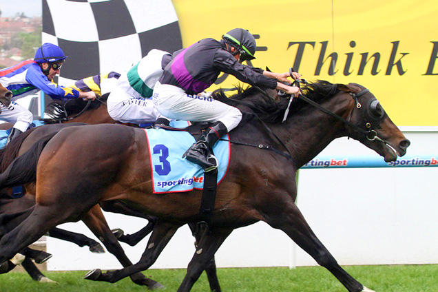 Fiorente wins the Melbourne Cup 2013